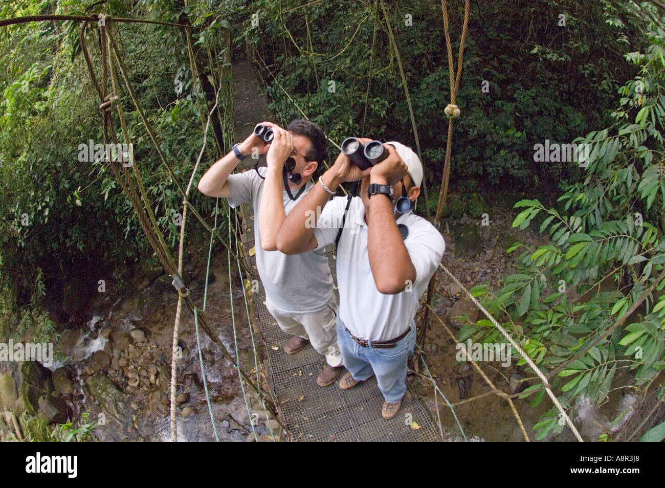 Bird watching in tropical rainforest Elle Valle Panama - Stock Image