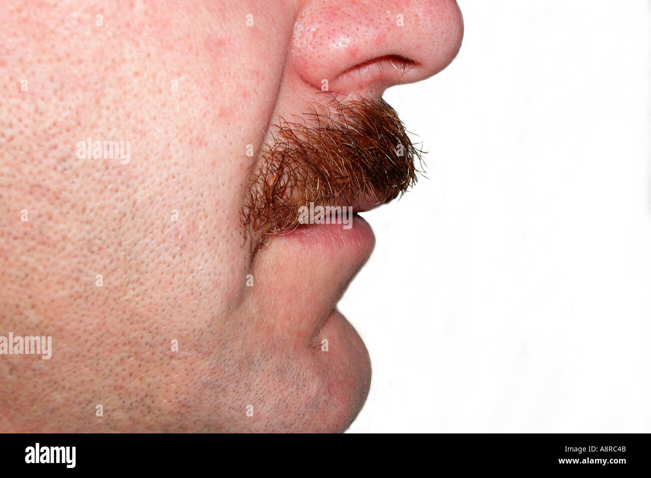 MR man with beard moustache - Stock Image