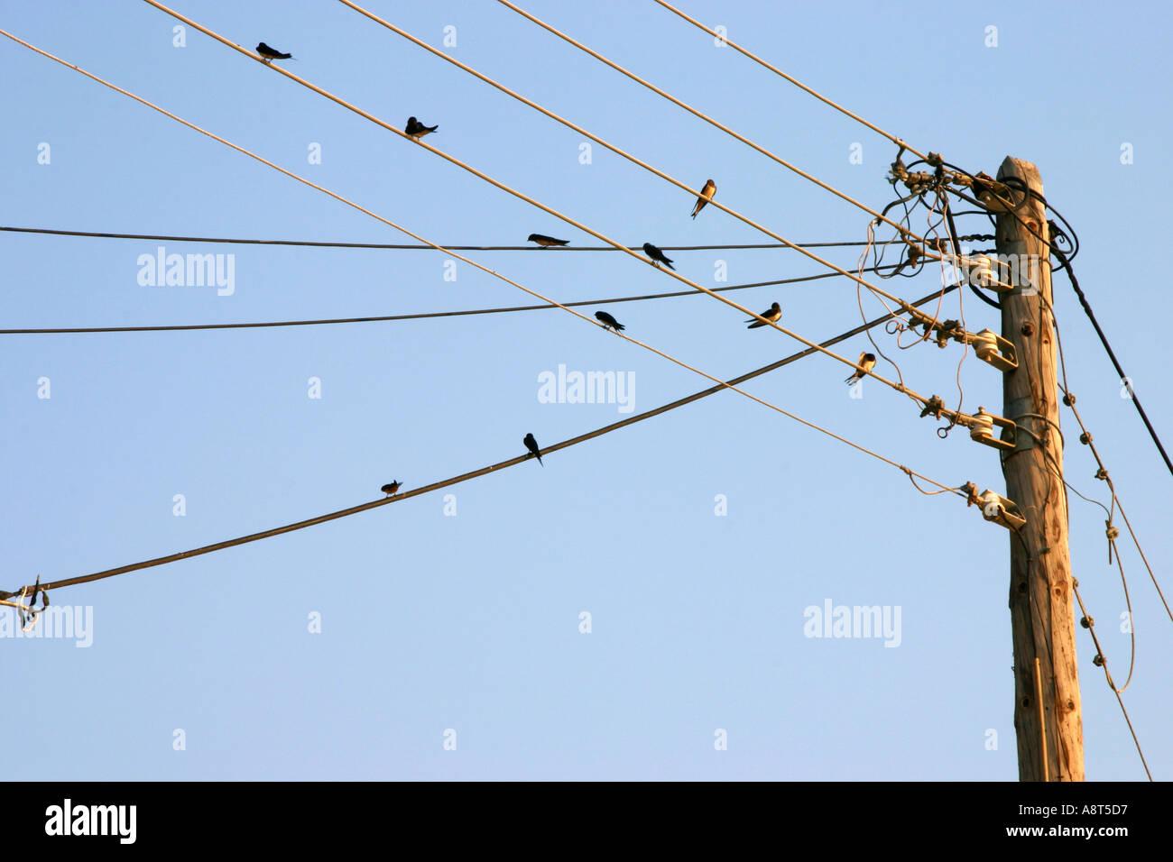 Birds on Telephone Wires Stock Photo: 2262486 - Alamy