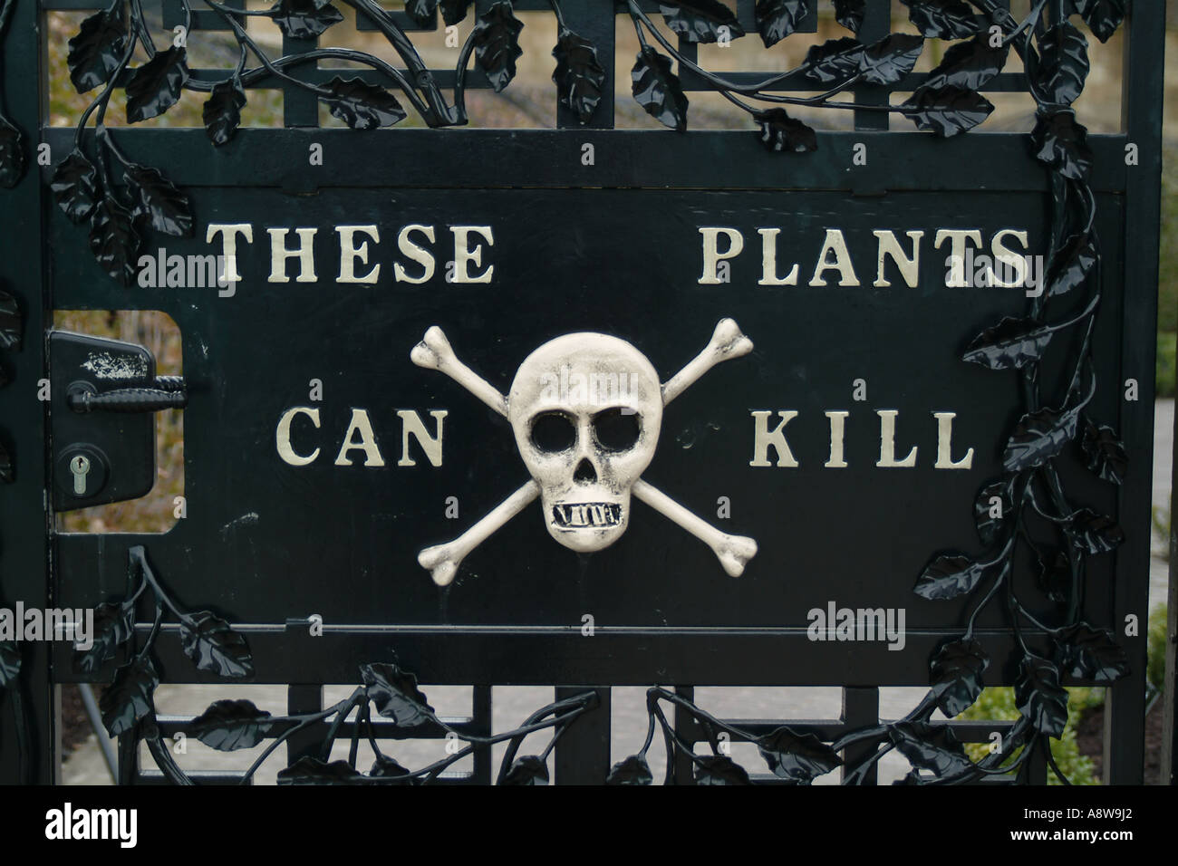 These plants can kill  The poison garden at Alnwick Water