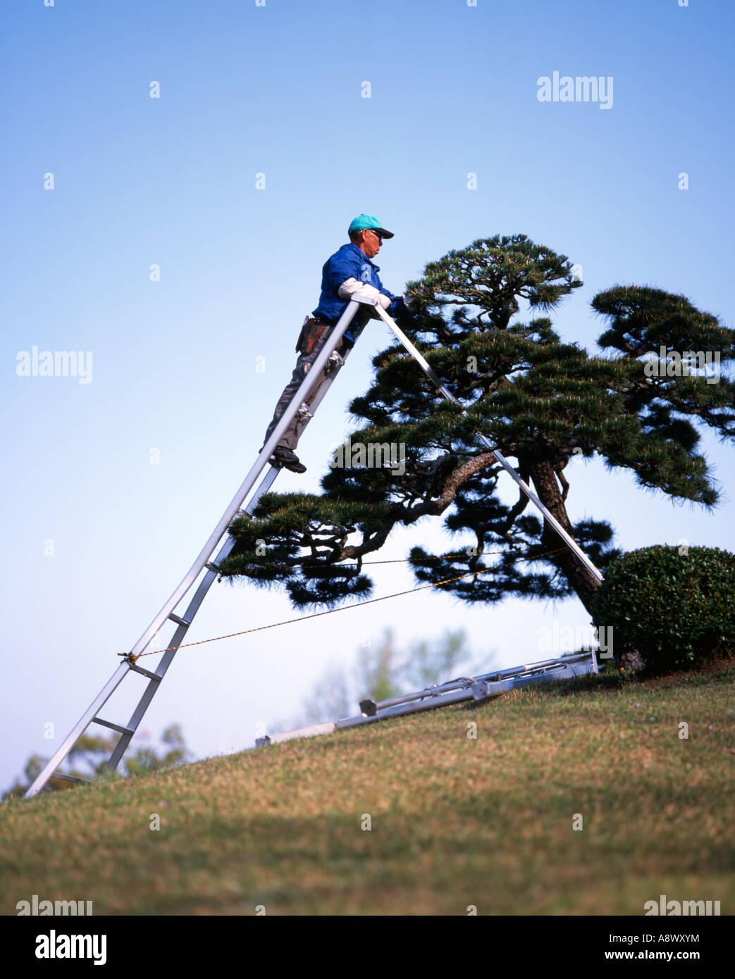 Japanese landscape gardener  Suizenji Jojuen Garden, Kumamoto - Stock Image