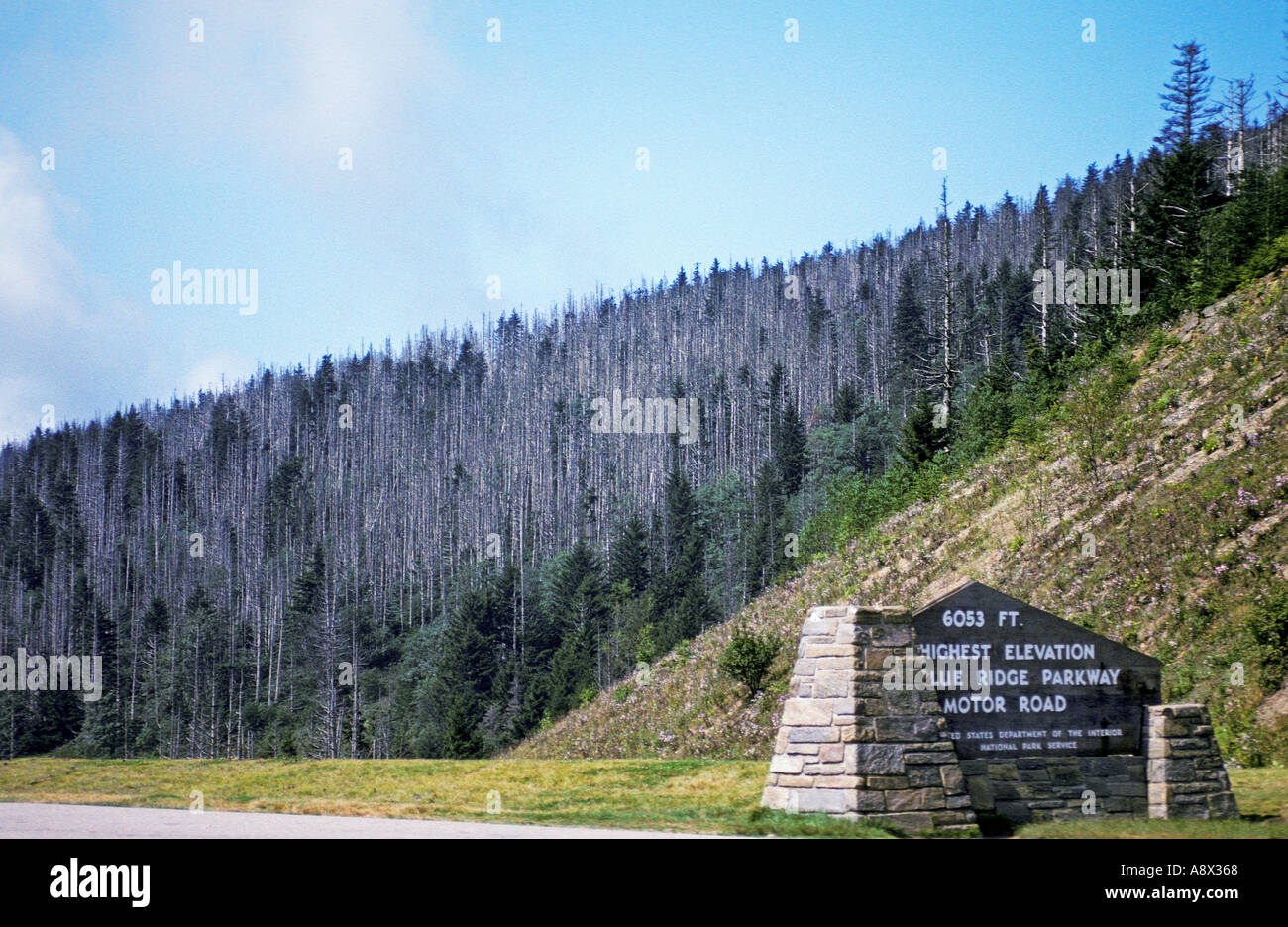 North carolina richland balsam highest point on blue ridge parkway north carolina richland balsam highest point on blue ridge parkway red spruce and fraser fir trees killed by acid rain publicscrutiny Image collections