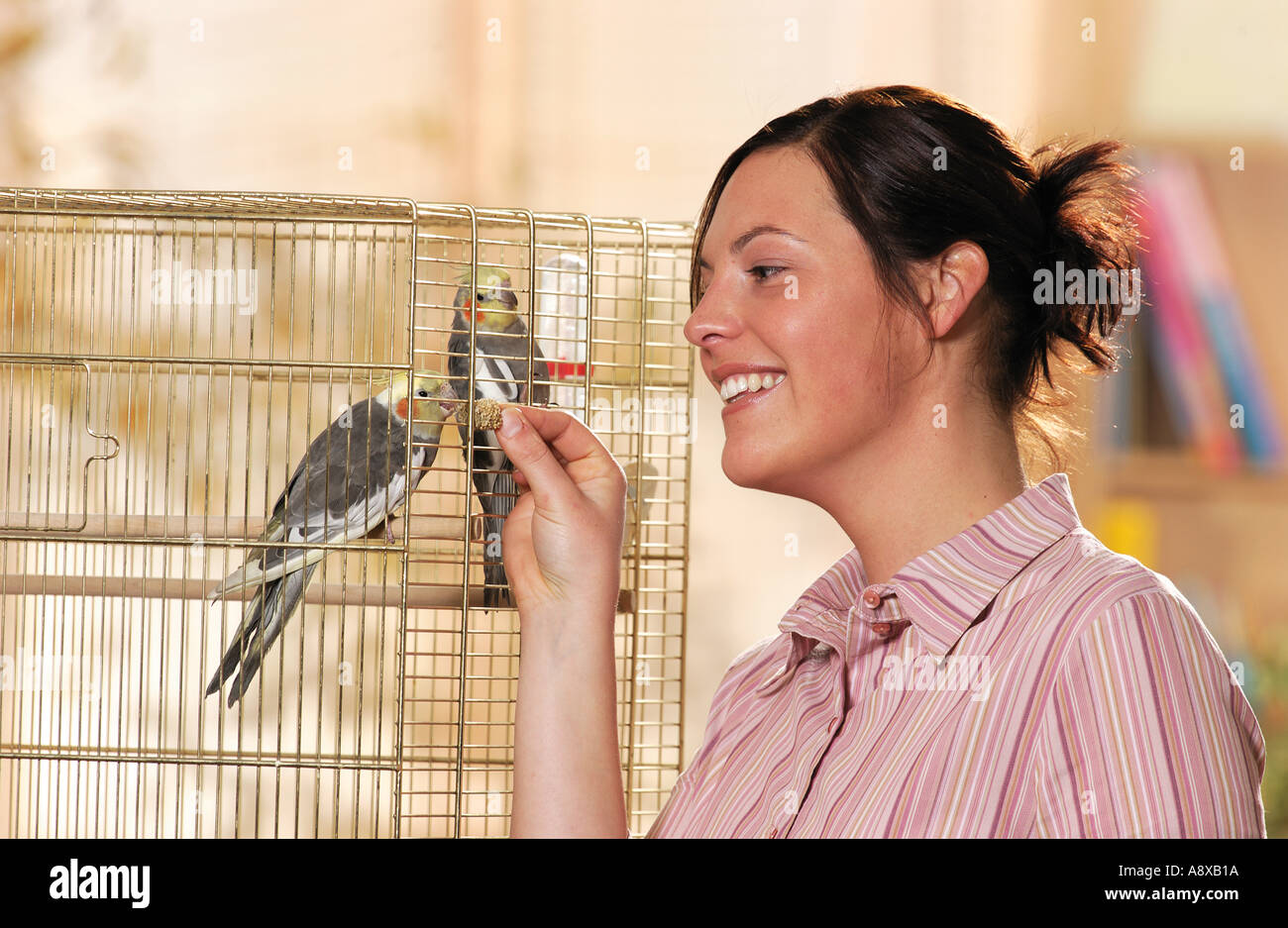 woman feeding two cockatiels in cage Stock Photo