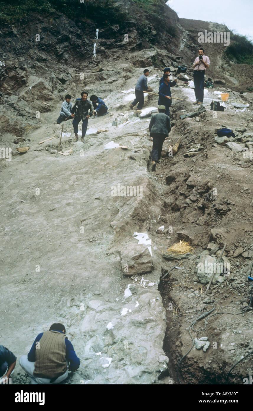 Sauropod excavation 1982 Stock Photo
