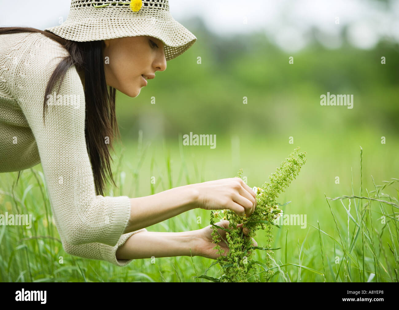 Young woman picking flowers - Stock Image