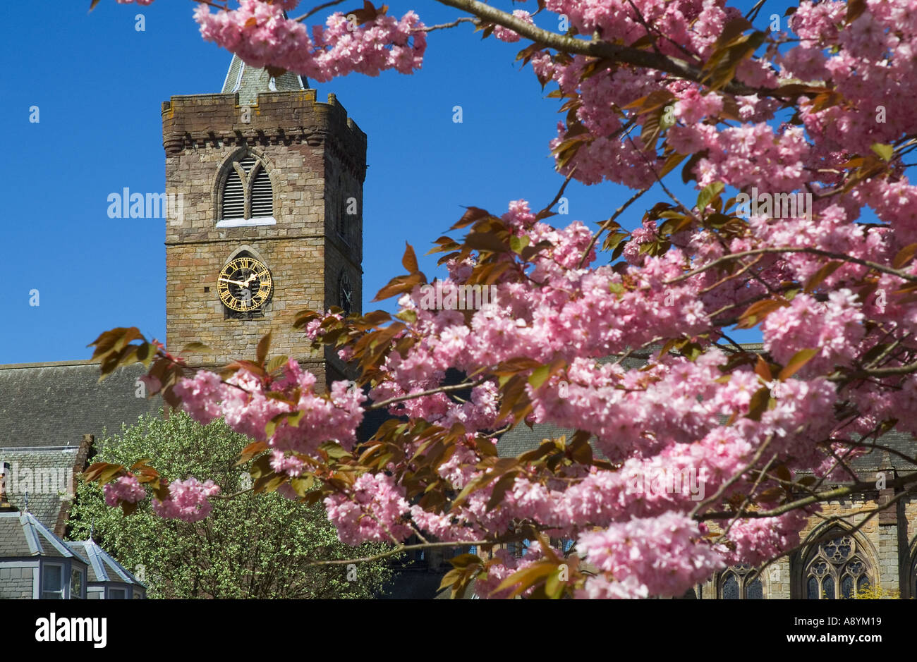 dh Dunblane cathedral DUNBLANE STIRLINGSHIRE UK Church clock tower springtime cherry blossom tree branches scotland Stock Photo