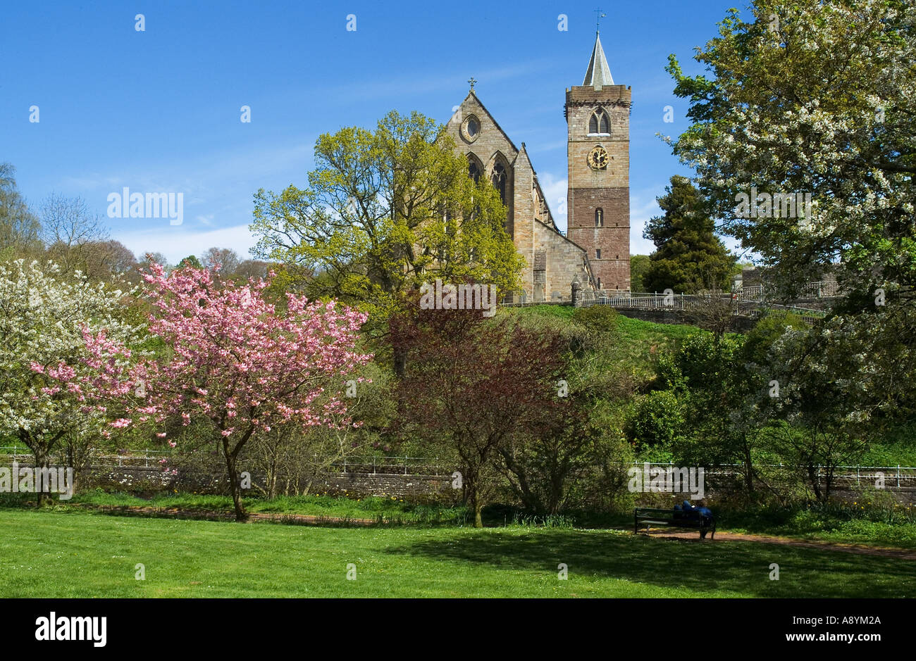 dh Dunblane cathedral DUNBLANE STIRLINGSHIRE Church clock tower riverbank Allan Water springtime cherry blossom trees Stock Photo