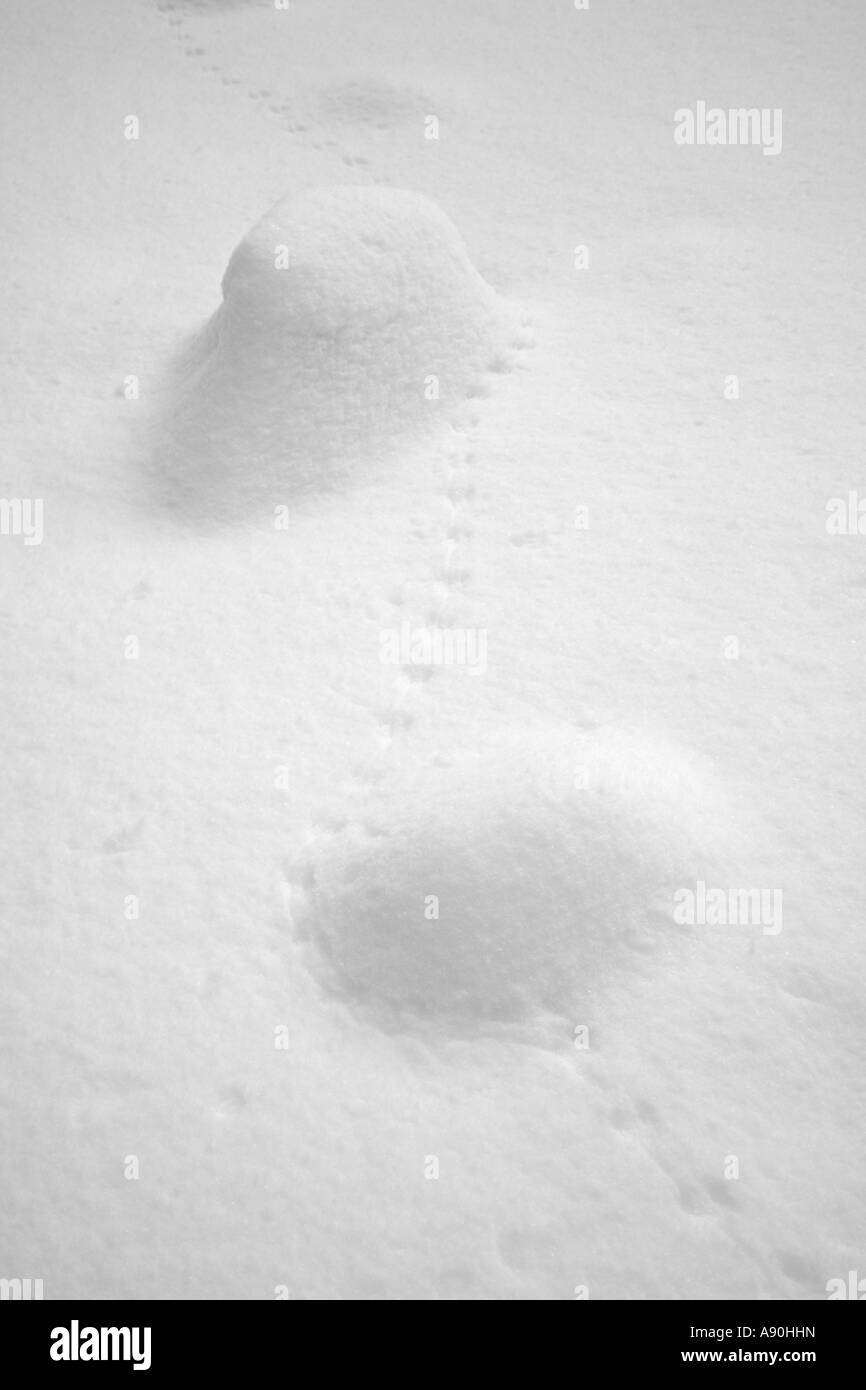 Small animal tracks etched into the snow covered field - Stock Image