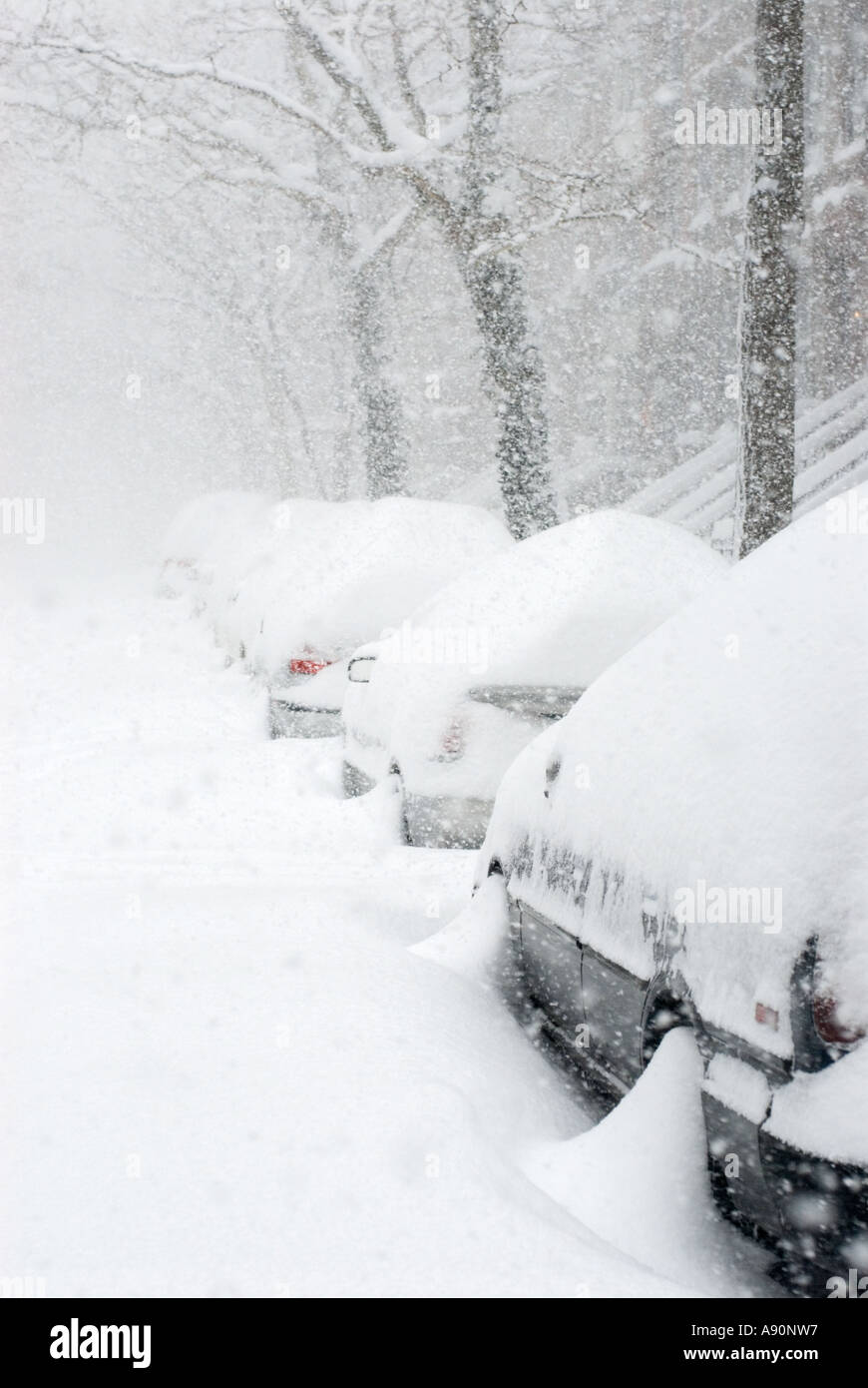 Cars Buried after Snowstorm in New York City, February 2006 - Stock Image