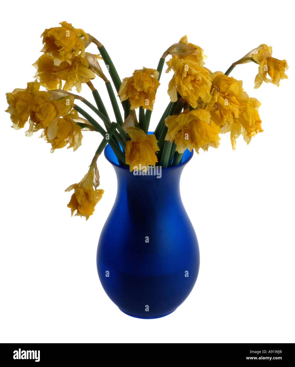 Dead flowers in a vase stock photo 6984682 alamy dead flowers in a vase reviewsmspy