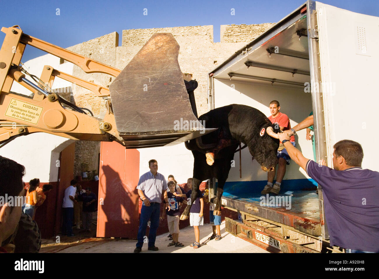 dead bull taken from bullring with horrified  spectators and children watching the bull lifted into a refridgerated truck - Stock Image