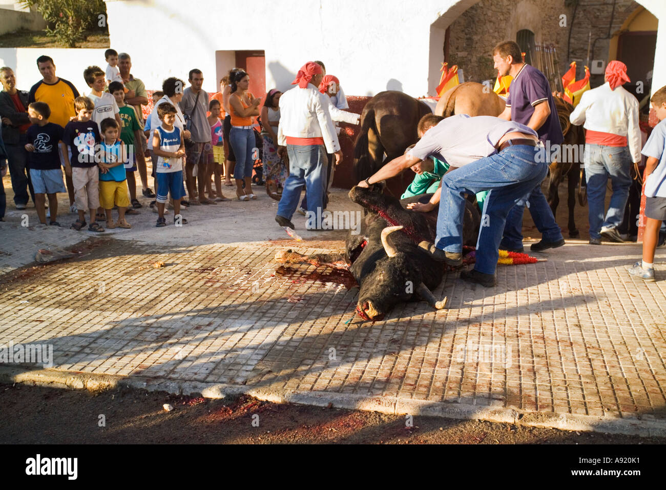 dead bull taken from bullring with blood on the pavement with horrified and fascinated spectators and children watching - Stock Image