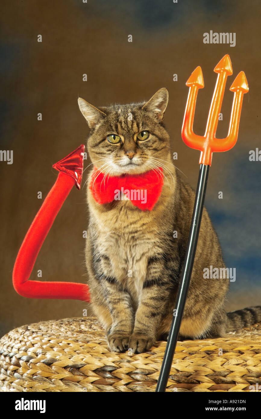 tabby domestic cat - as devil - Stock Image