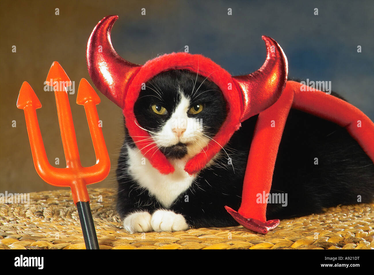 domestic cat - as devil - Stock Image
