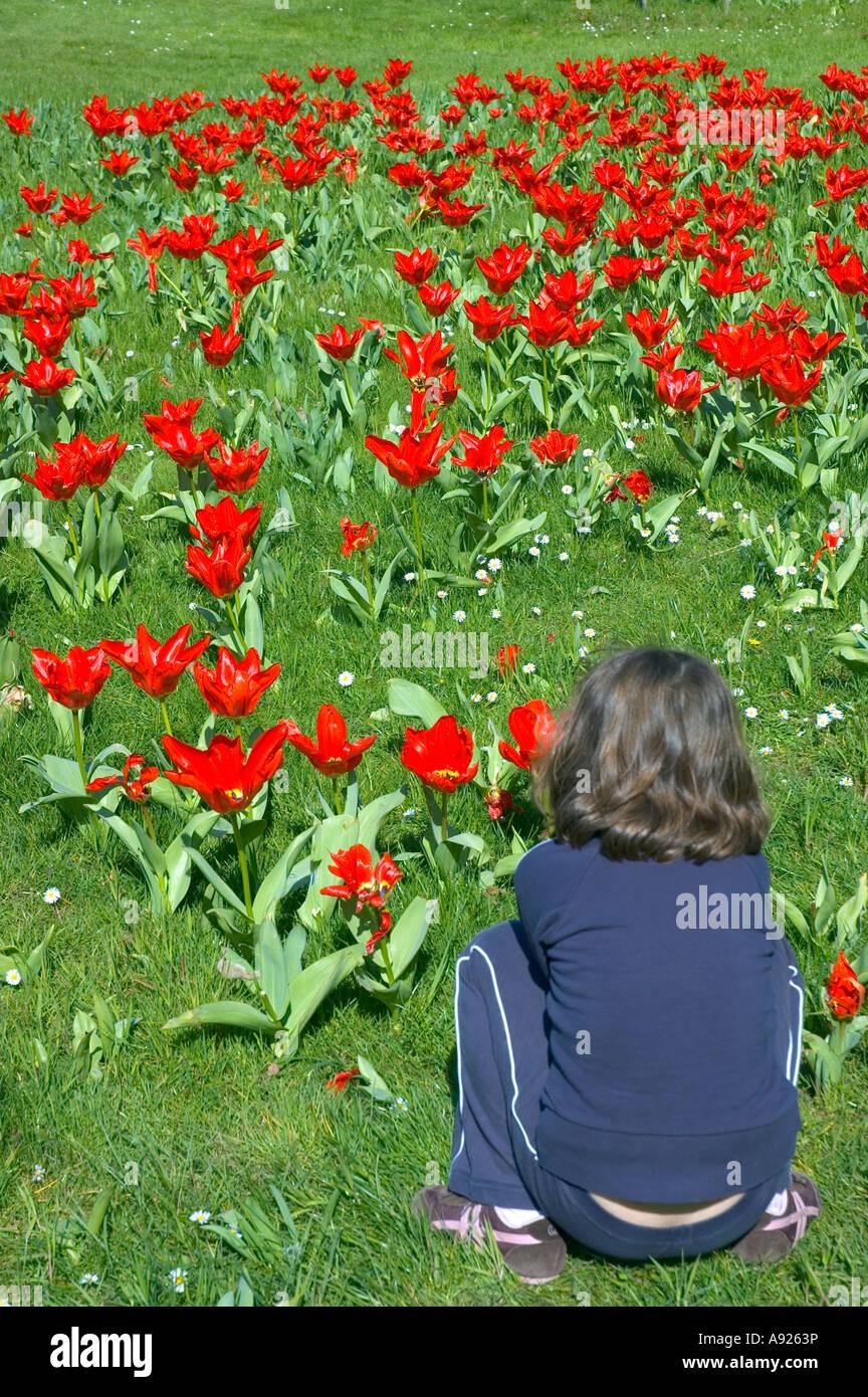 "PARIS FRANCE, Female Child, Enjoying Nature in ""Bois de Boulogne"" Park ""Bagatelle Garden"", Red Tulips, in Field Stock Photo"