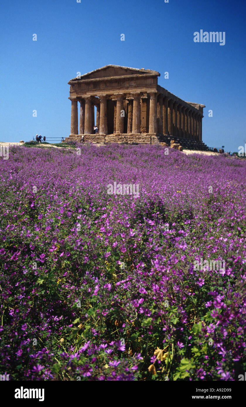 Italy Sicily Agrigent Agrigento temple of the Concordia - Stock Image