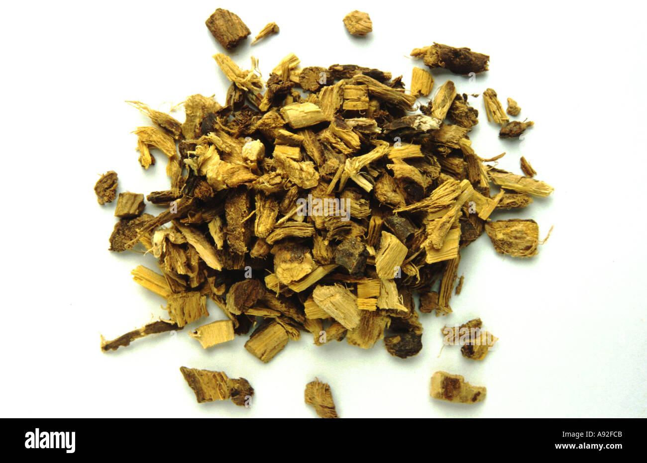 Medicinal plant Süßholz Lakritzwurzel Glycyrrhiza glabra Liquorice root Suessholz - Stock Image