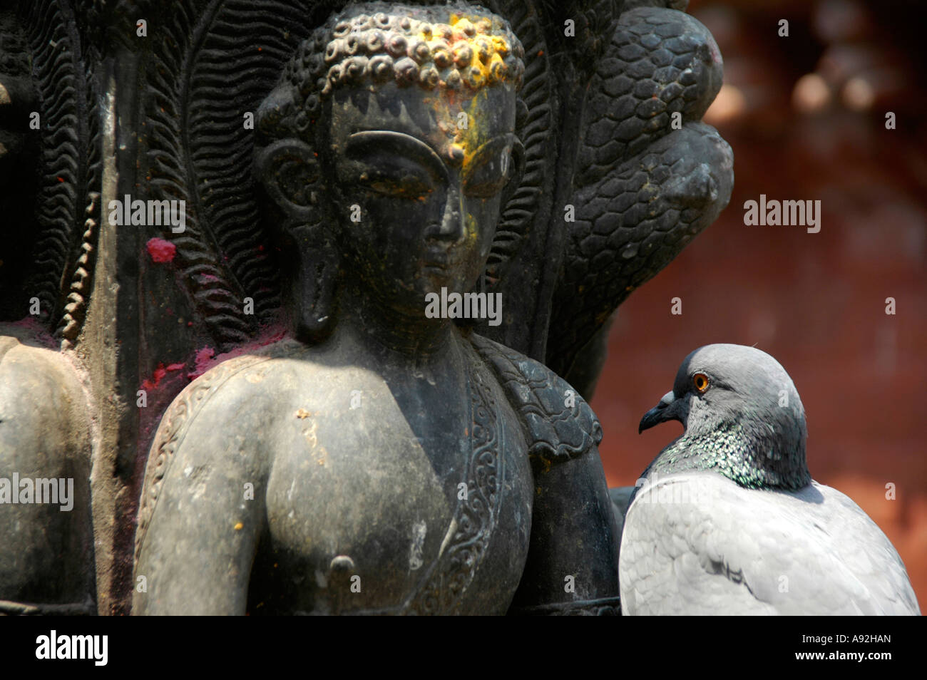 Pigeons faces Buddha statue Seto Macchendranath Temple Kel Tole Kathmandu Nepal - Stock Image