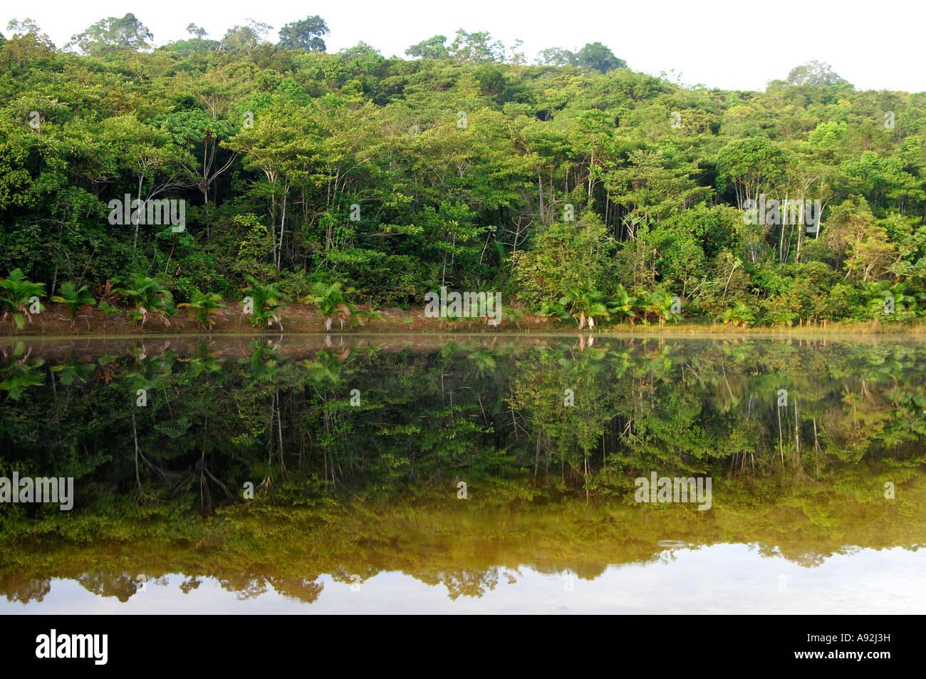 Lake in the tropical rainforest, Amazon region, Brazil - Stock Image