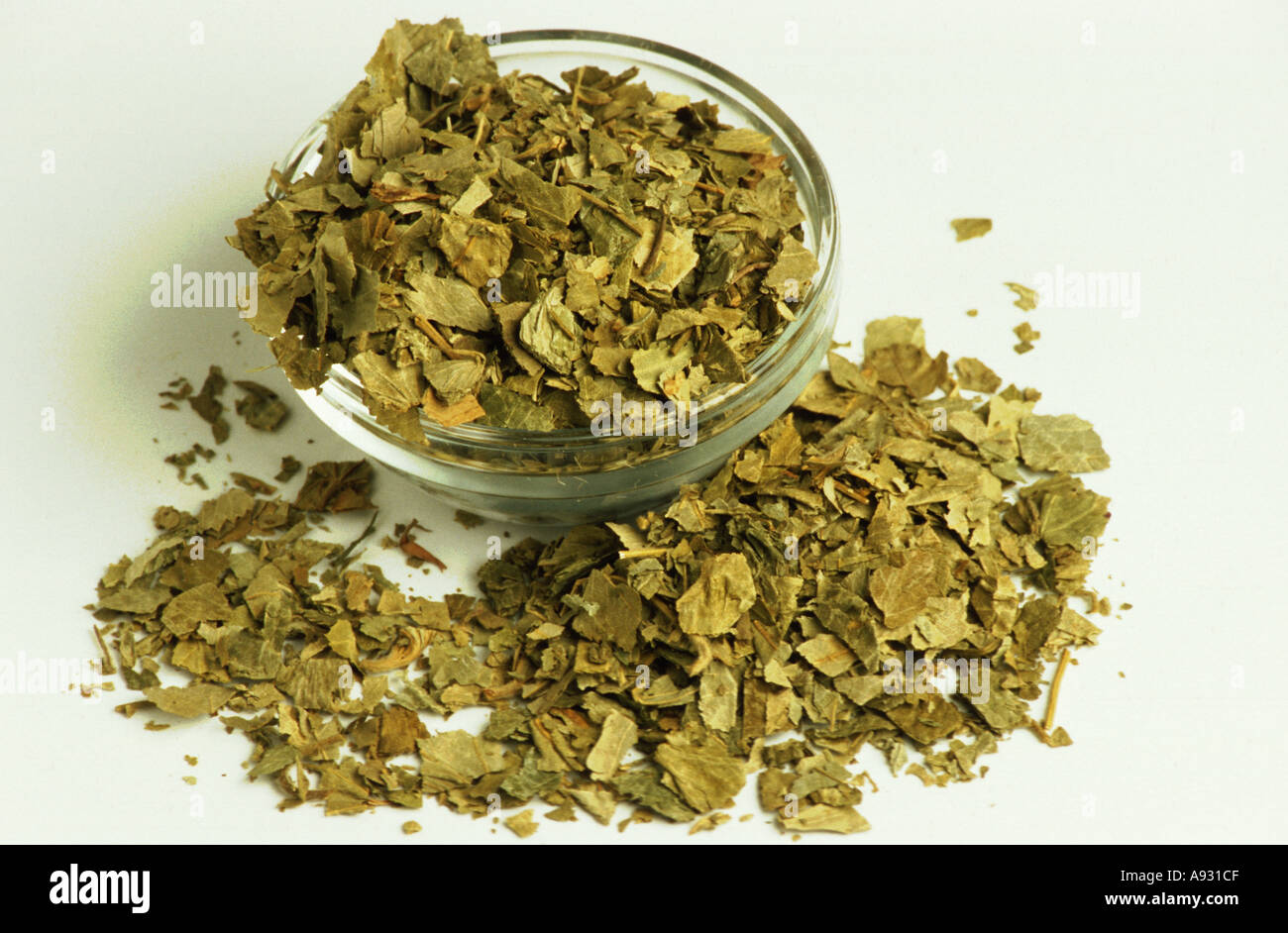 Medicinal plant dried herb of the Alchemilla vulgaris Lady s mantle Frauenmantel - Stock Image