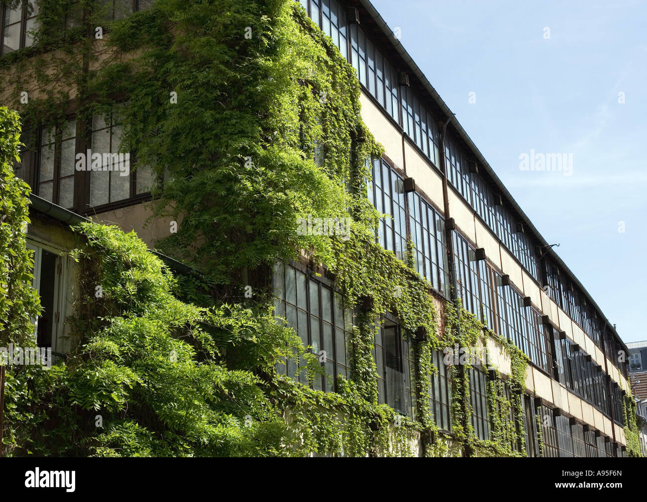 Ivy covered building - Stock Image