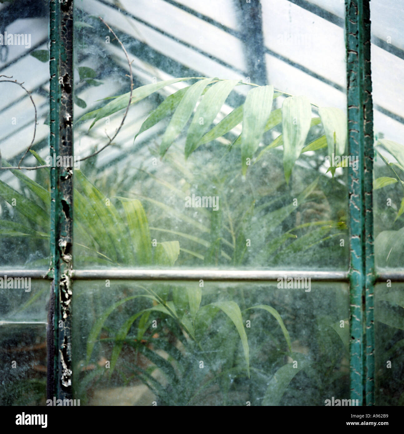 plants in a greenhouse of the botanic garden of Palermo Sicily Italy - Stock Image
