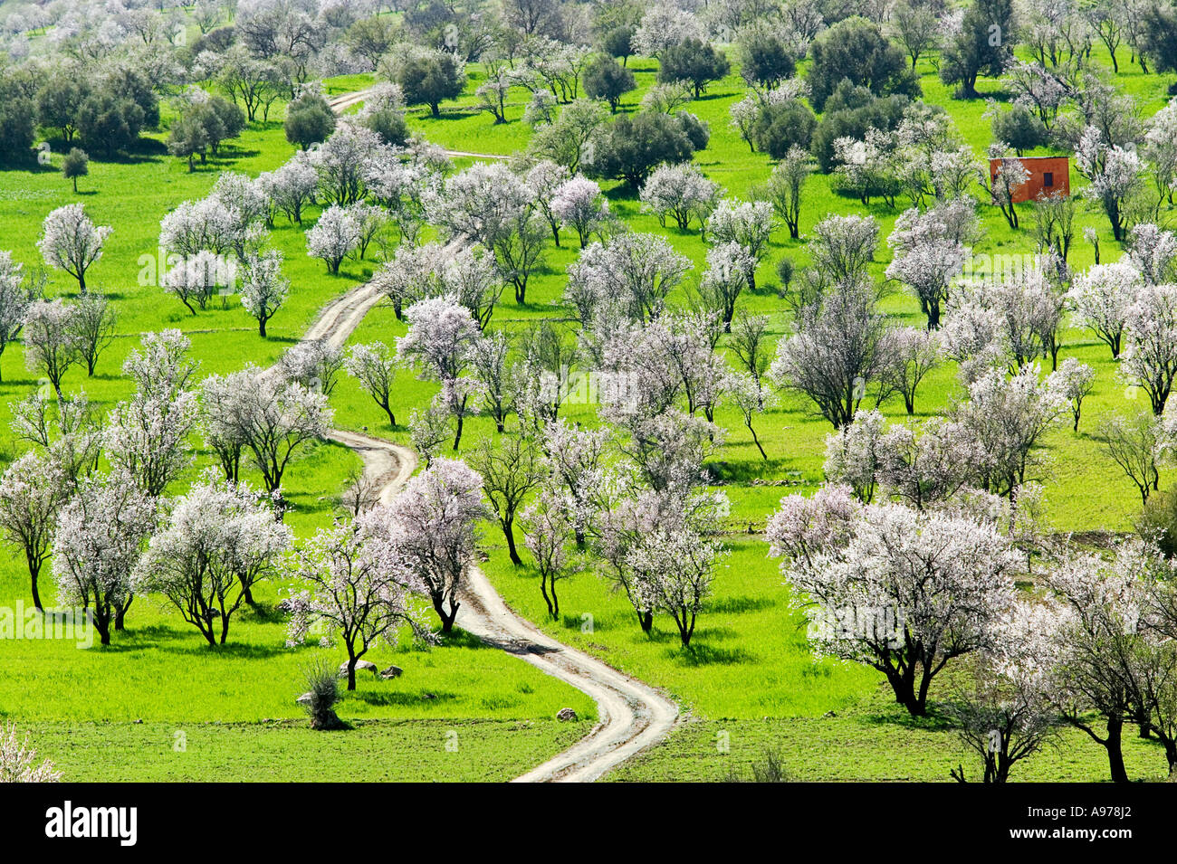 Ourika valley - Almond trees - Morocco - Stock Image