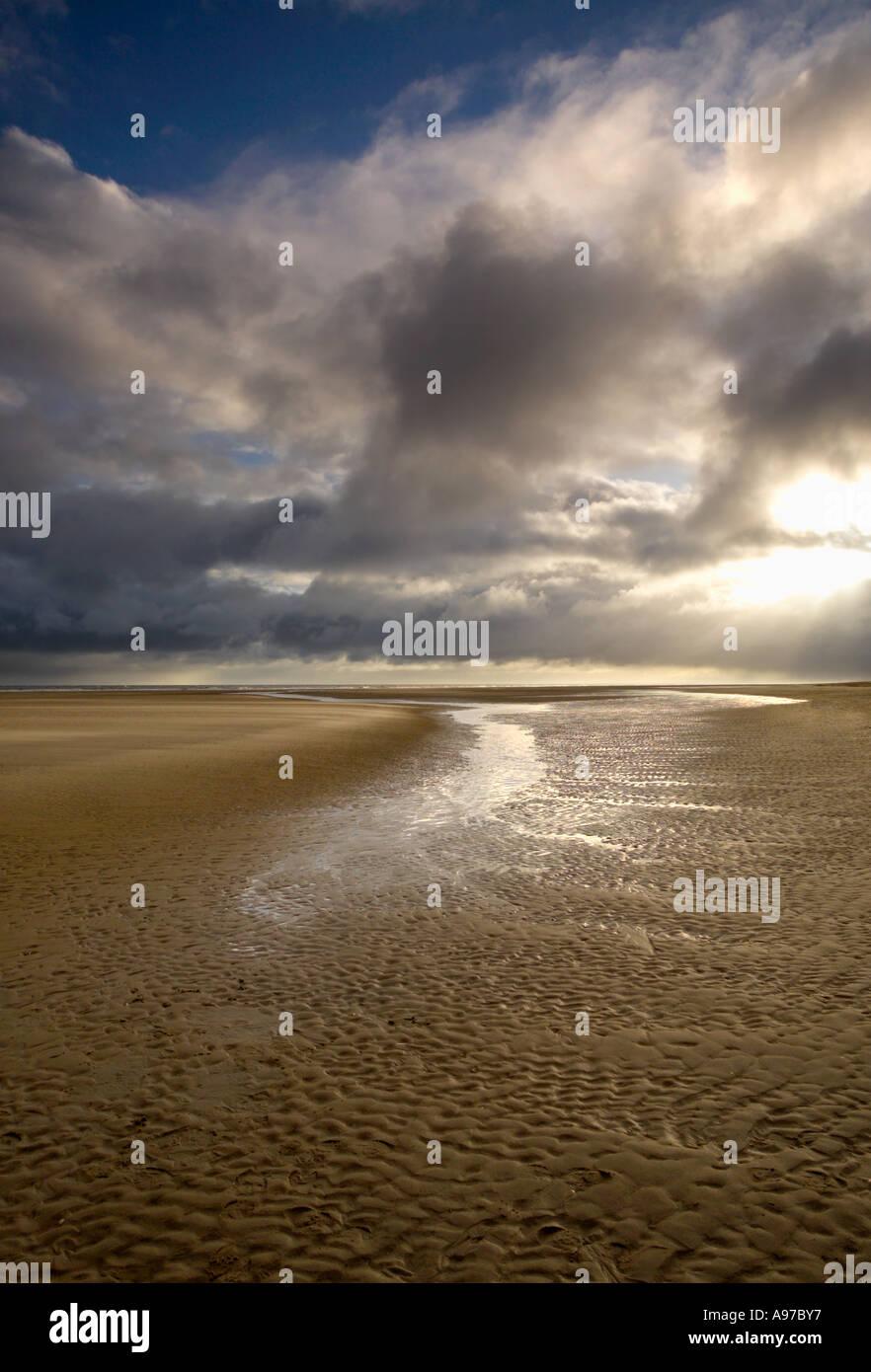 Holme Beach Dog Walking