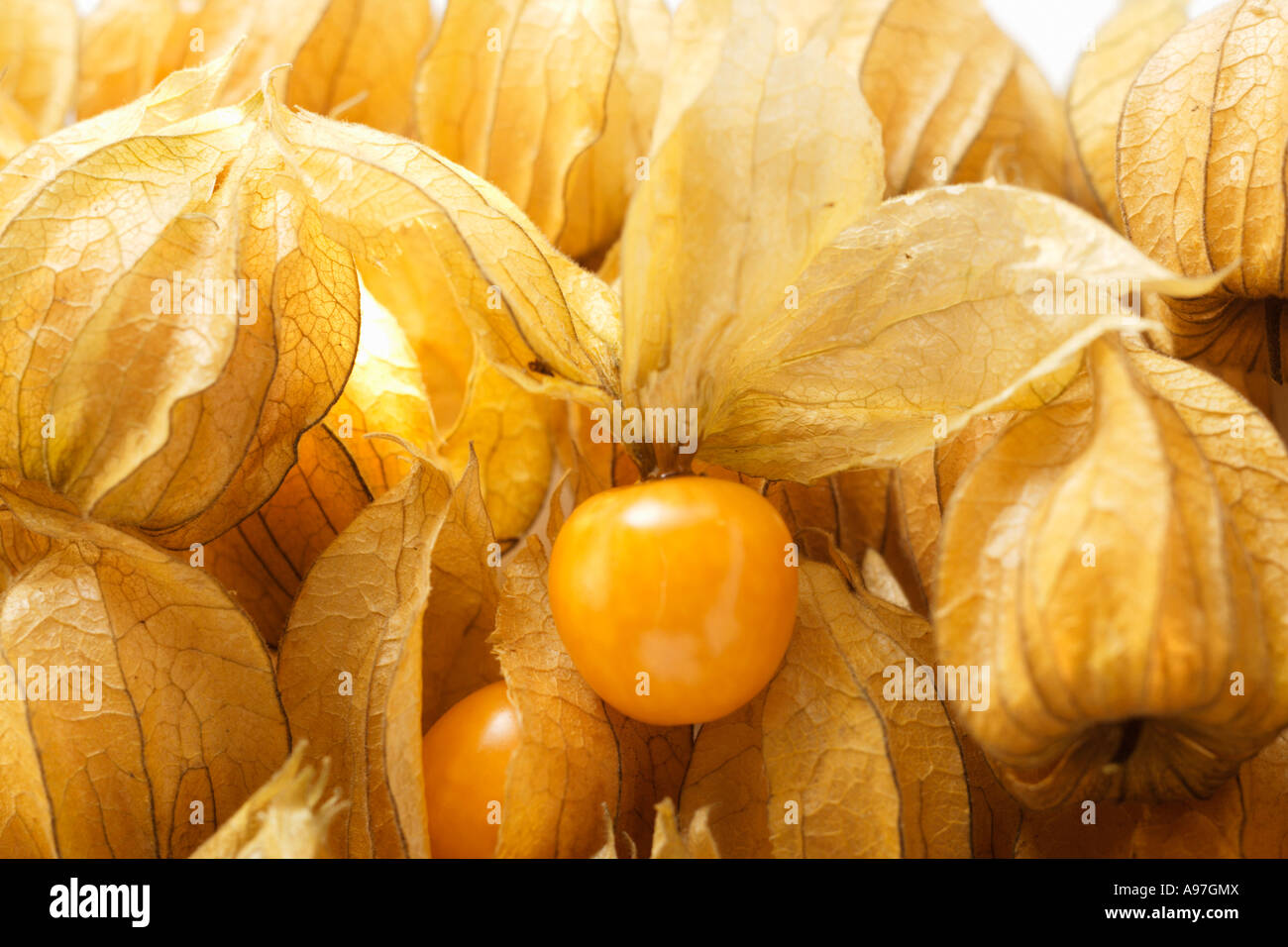 Several Physalis with and without calyxes close up FoodCollection Stock Photo