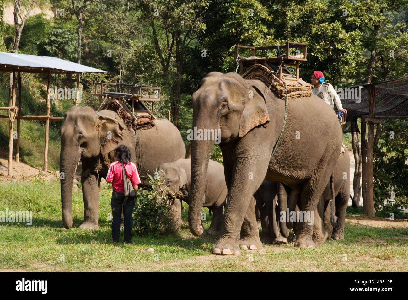 Elephant camp near Chiang Dao, Thailand Stock Photo