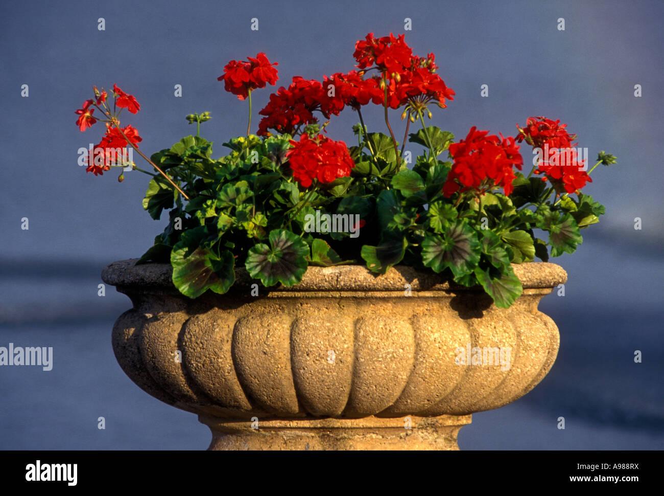 Red Flowers In Stone Planter Lake Starnberg Starnberg