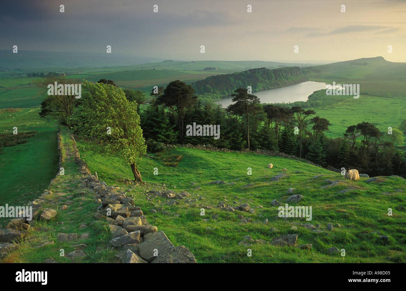 Hadrians Wall at Housesteads Northumberland England UK - Stock Image