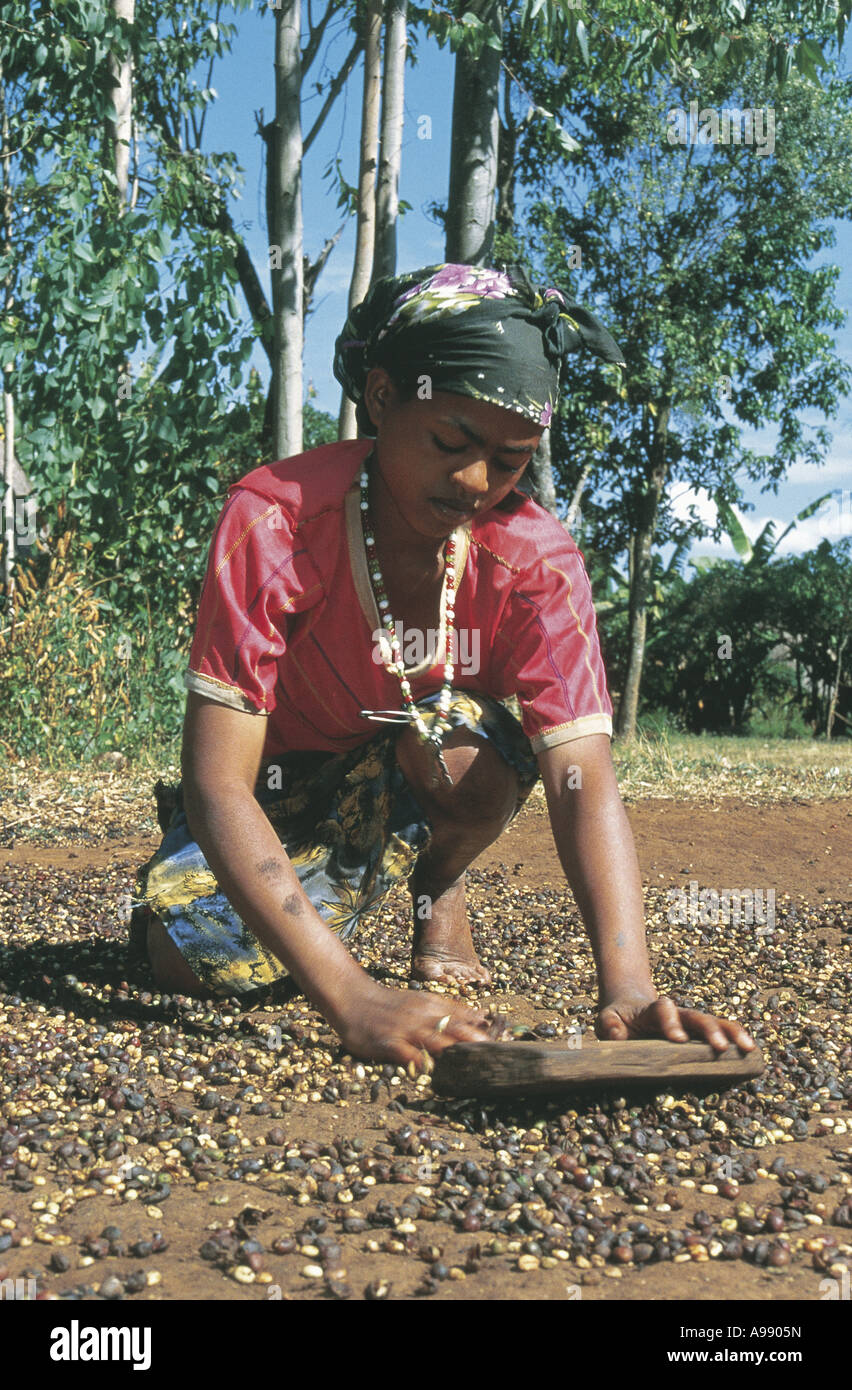 Woman rubbing off bean husks and drying on road in sun Sodo Ethiopia - Stock Image