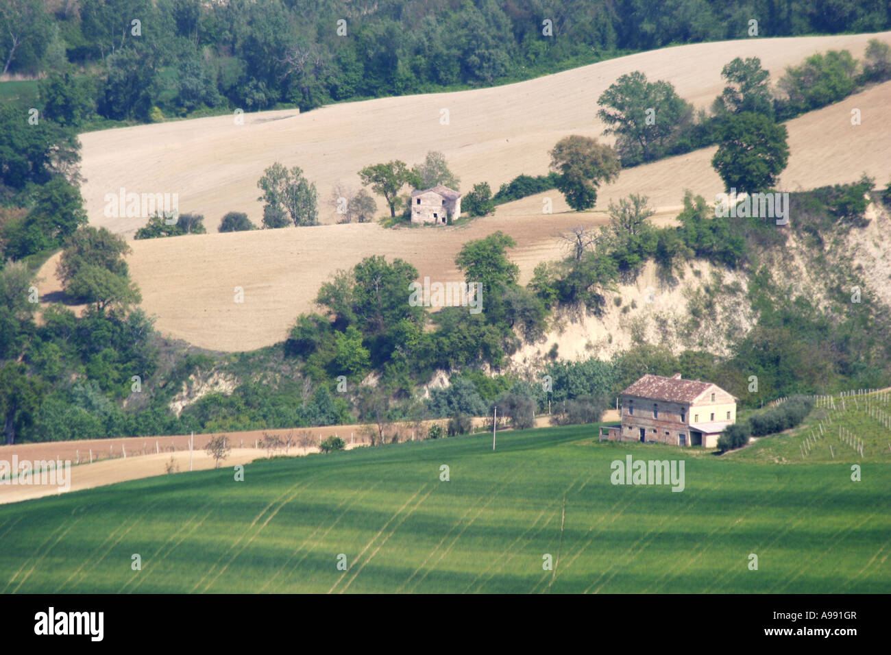 beautiful ,scenic and panoramic view of the rolling farm landscape  in Le Marche Italy Stock Photo