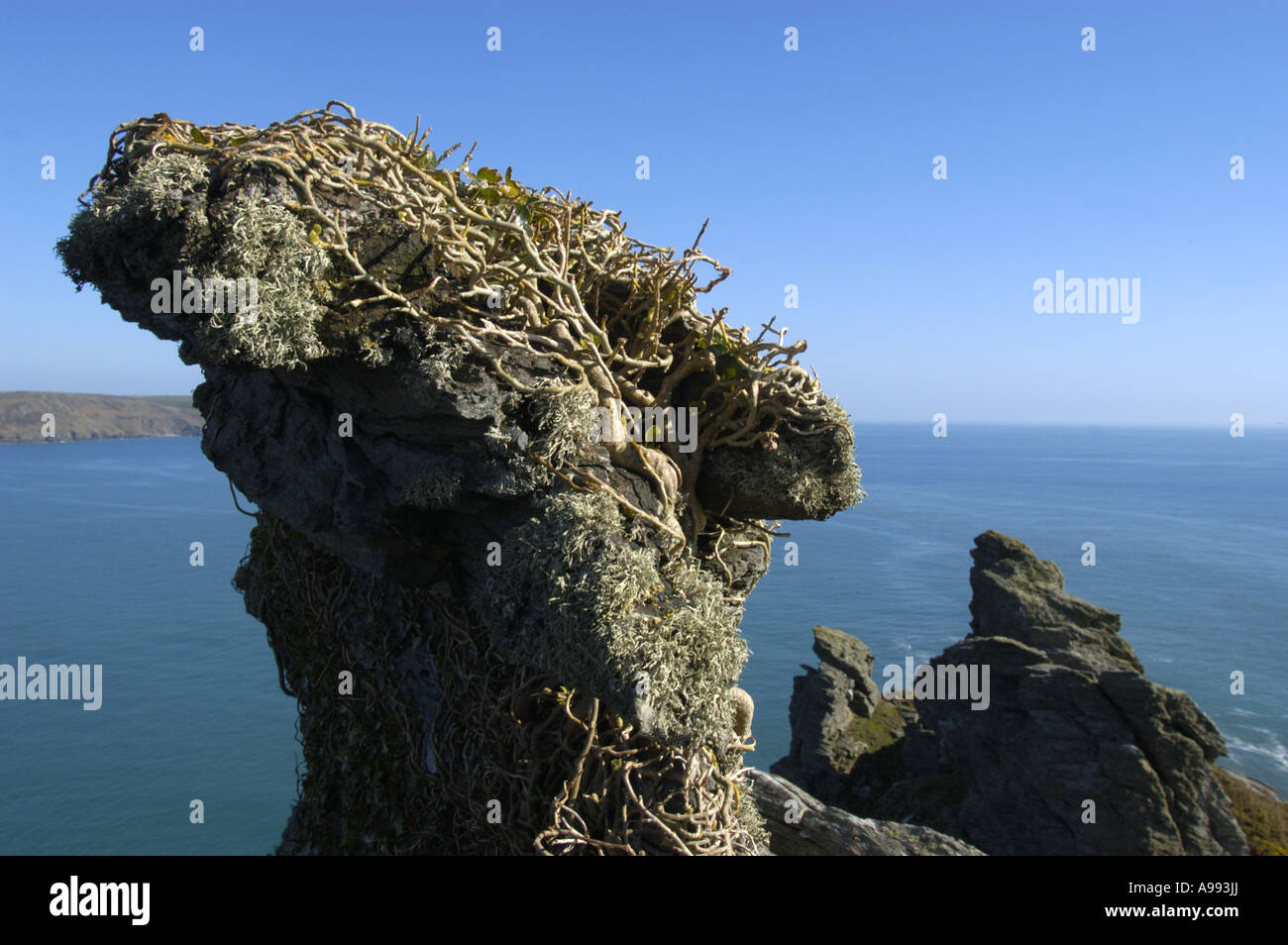 Rock formations in Starehole Bay near Bolt Head on the South West Coast in south Devon England Stock Photo