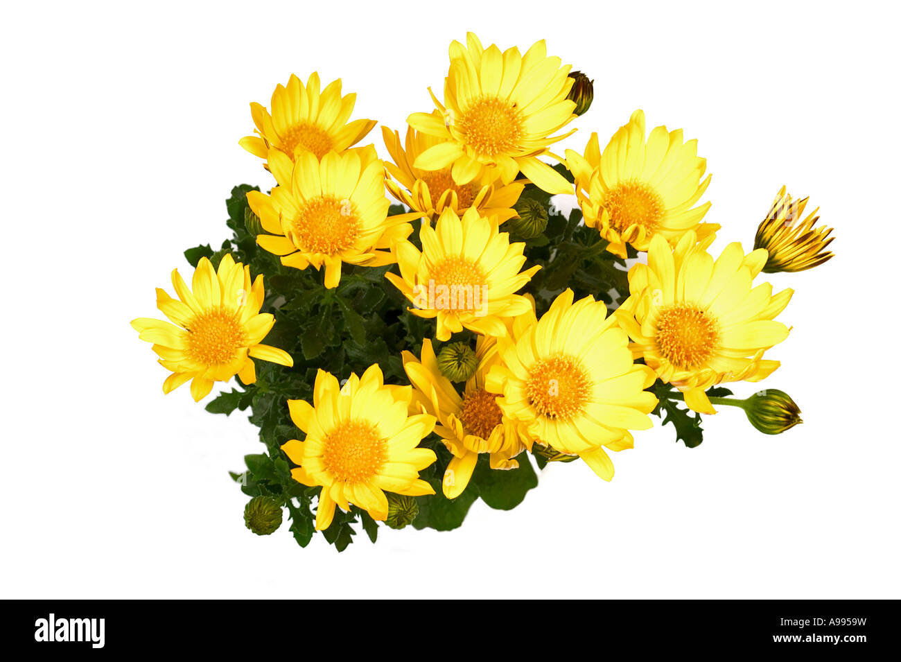 Bunch Of Yellow Flowers Isolated On White Stock Photo 12291780 Alamy