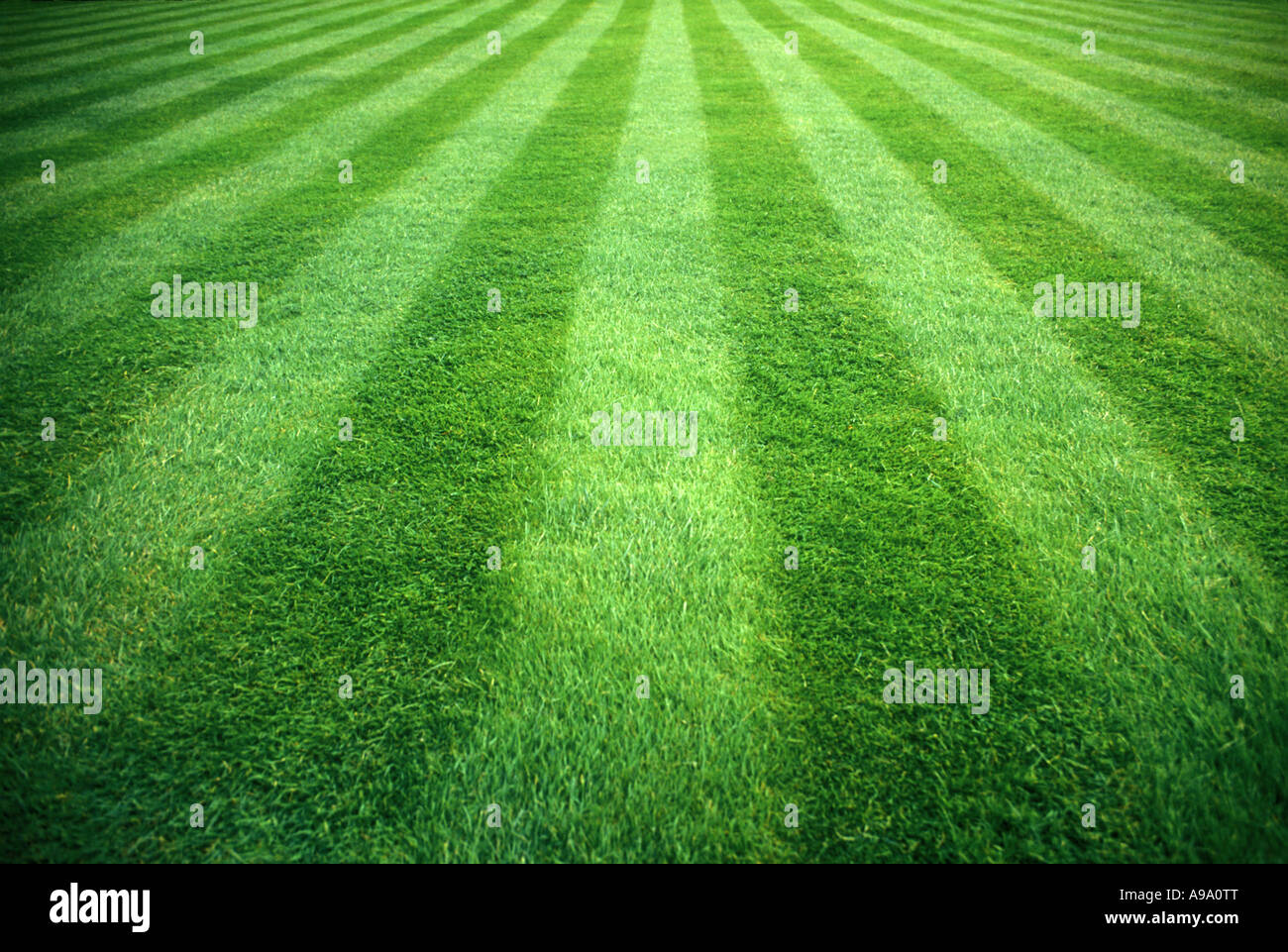 MANICURED GREEN LAWN STRIPES ENGLAND UK - Stock Image