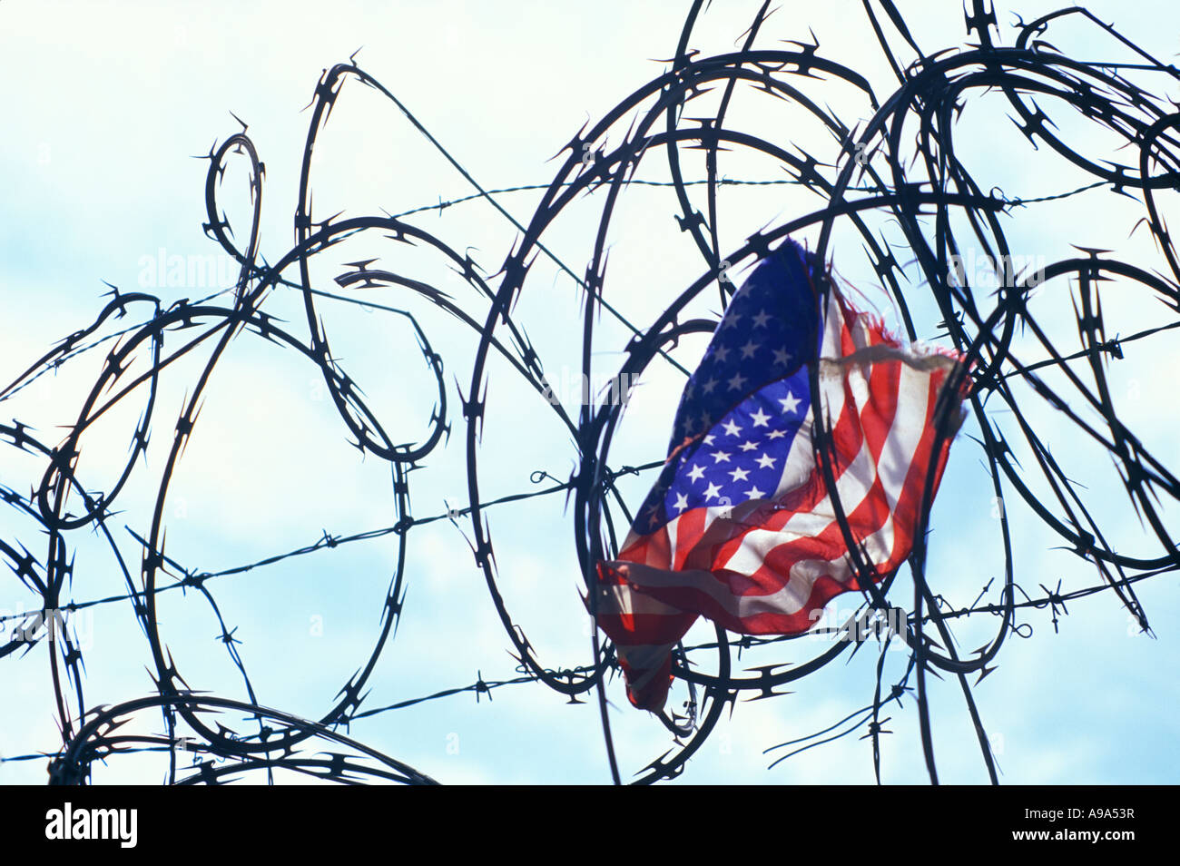 Caught In Barbed Wire Stock Photos & Caught In Barbed Wire Stock ...