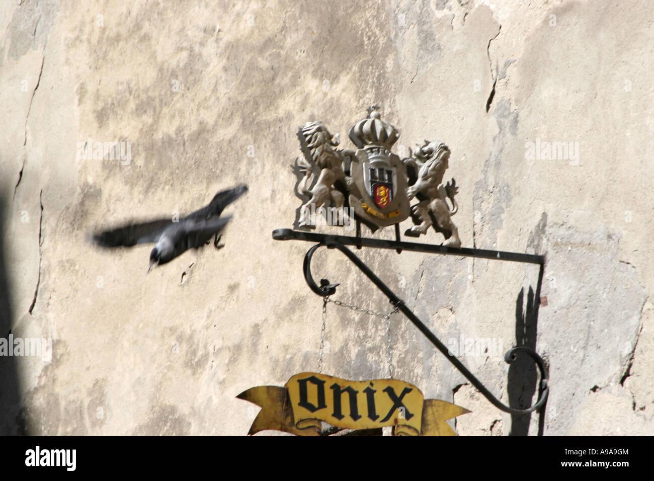 Magpie bird fly to wrought iron sign. Sighisoara April 2007 Romania Stock Photo