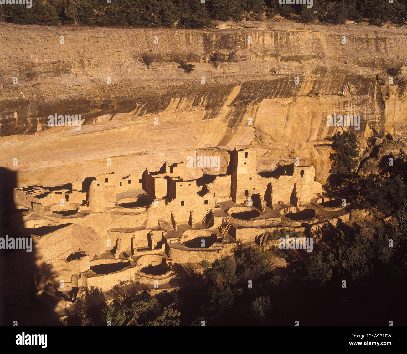 ANASAZI CLIFF PALACE RUINS MESA VERDE NATIONAL PARK CORTEZ COLORADO USA - Stock Image