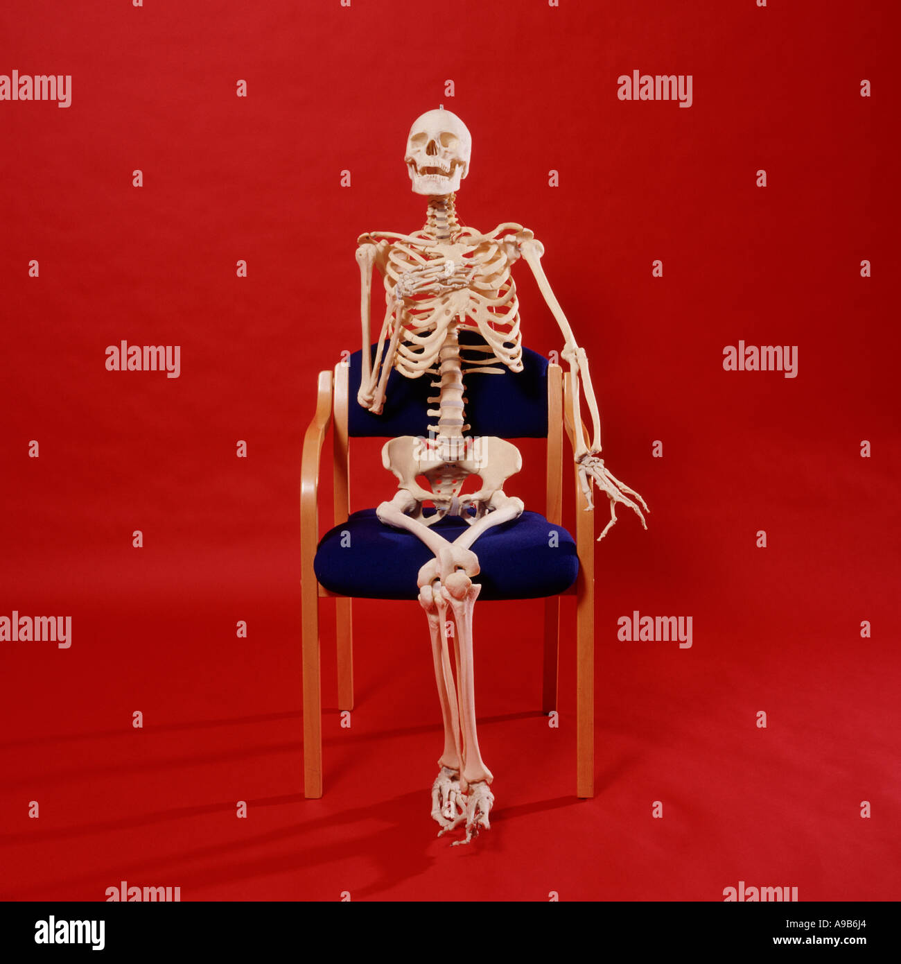 skeleton relaxing in a chair stock photo 7034787 alamy