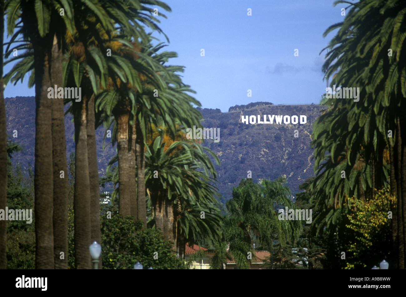PALM TREES HOLLYWOOD SIGN WINDSOR BOULEVARD LOS ANGELES CALIFORNIA USA