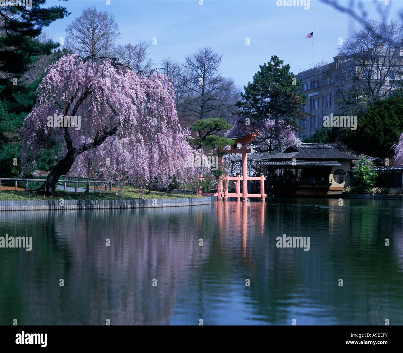Japanese Inspired Garden In Grant Park: TORII GATEWAY JAPANESE HILL AND POND GARDEN BROOKLYN
