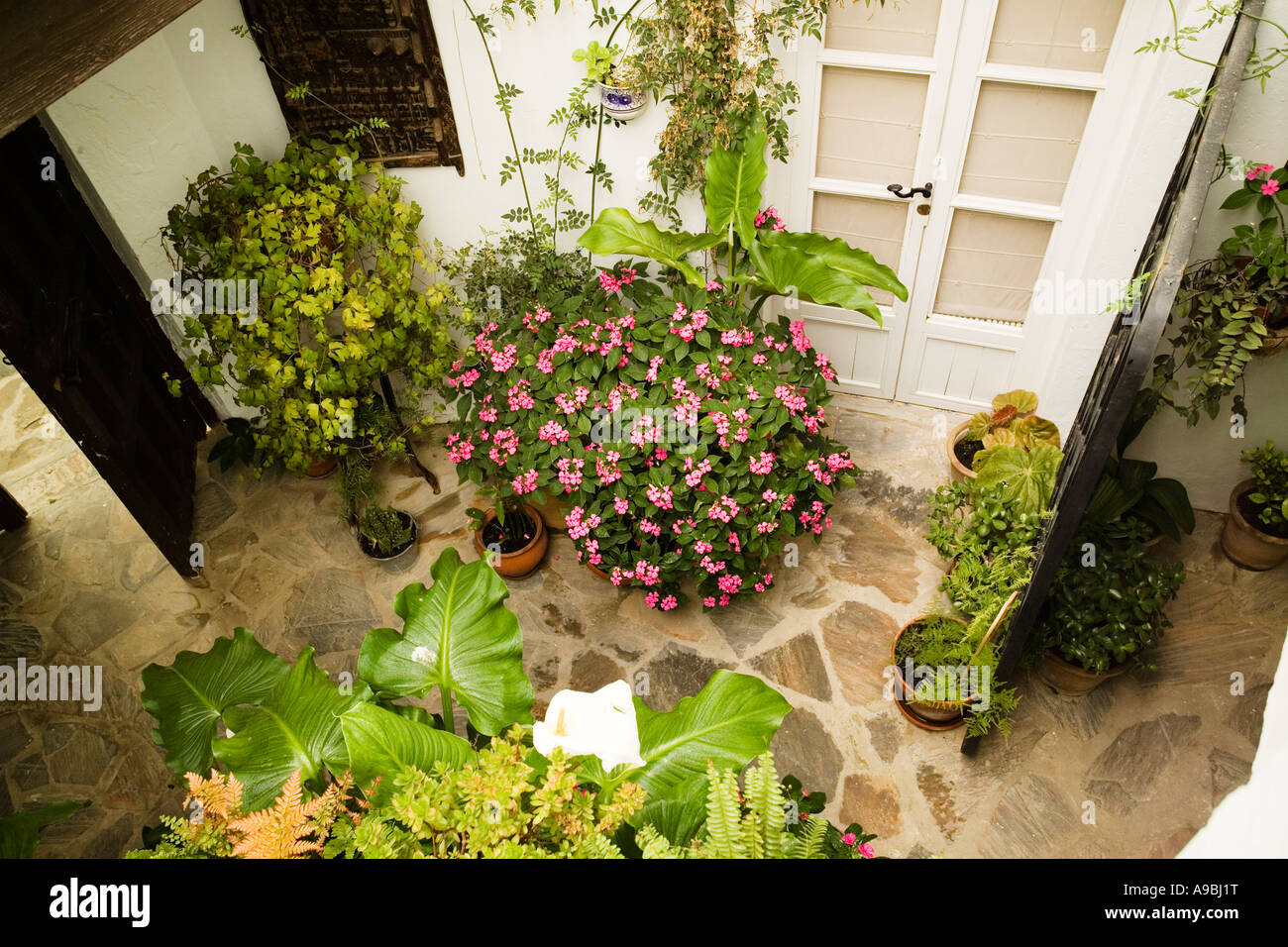 mediterranean shady courtyard garden with terracotta containers with ...