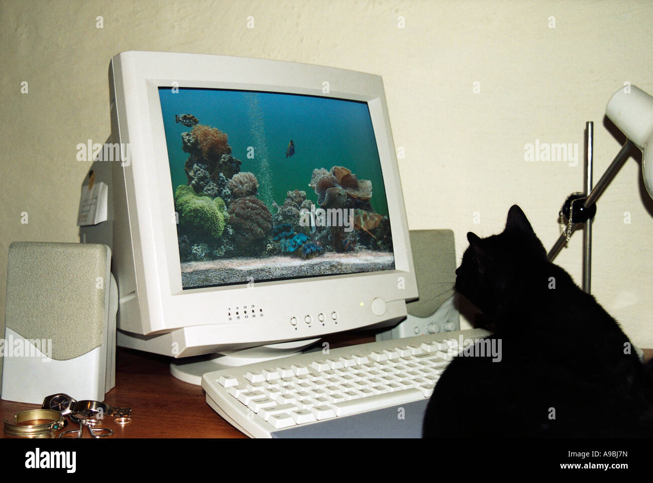 Cat looking at screensaver on computer Stock Photo