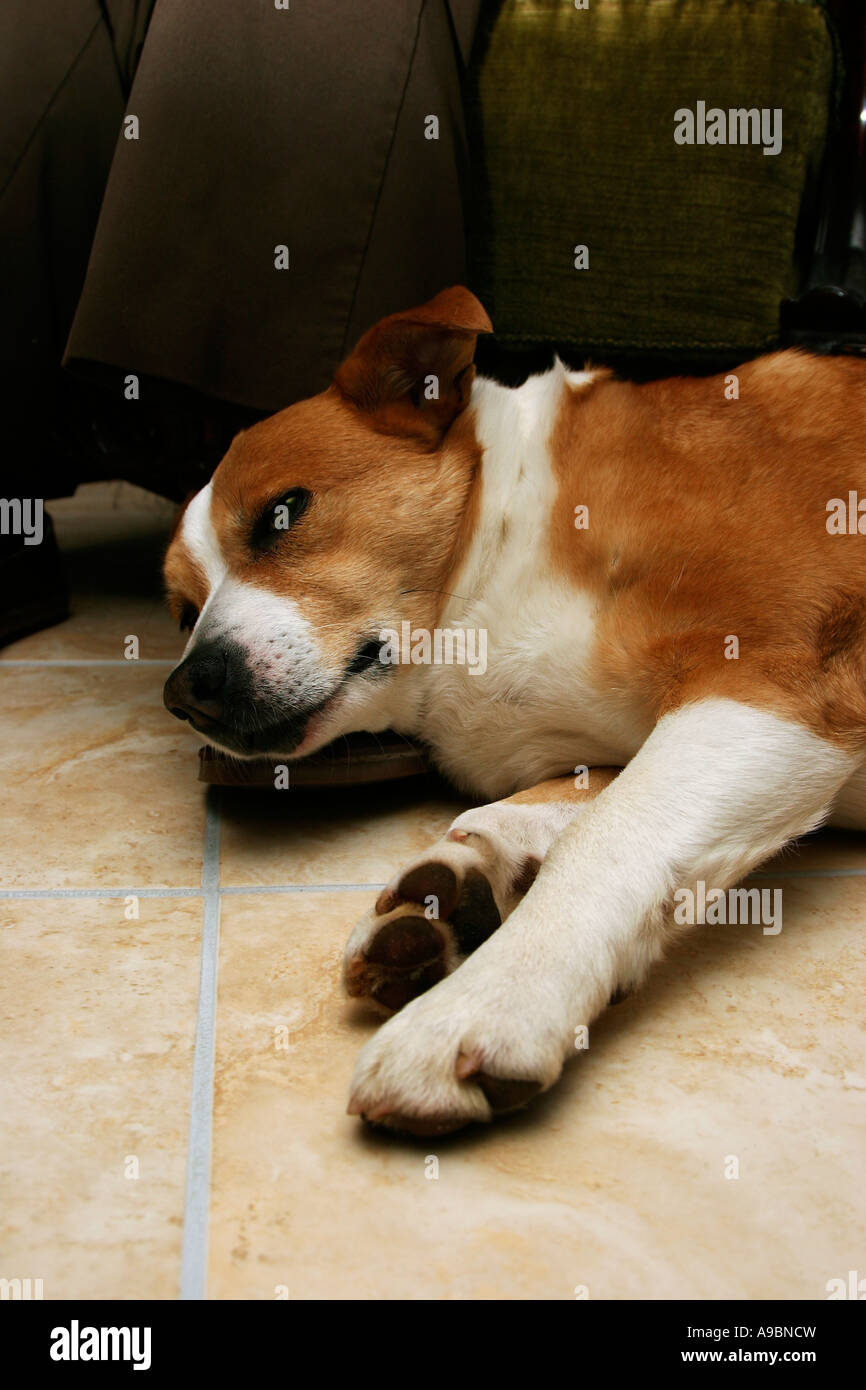 Good concept image for loyalty showing mans best friend resting loyally at his owners feet - Stock Image