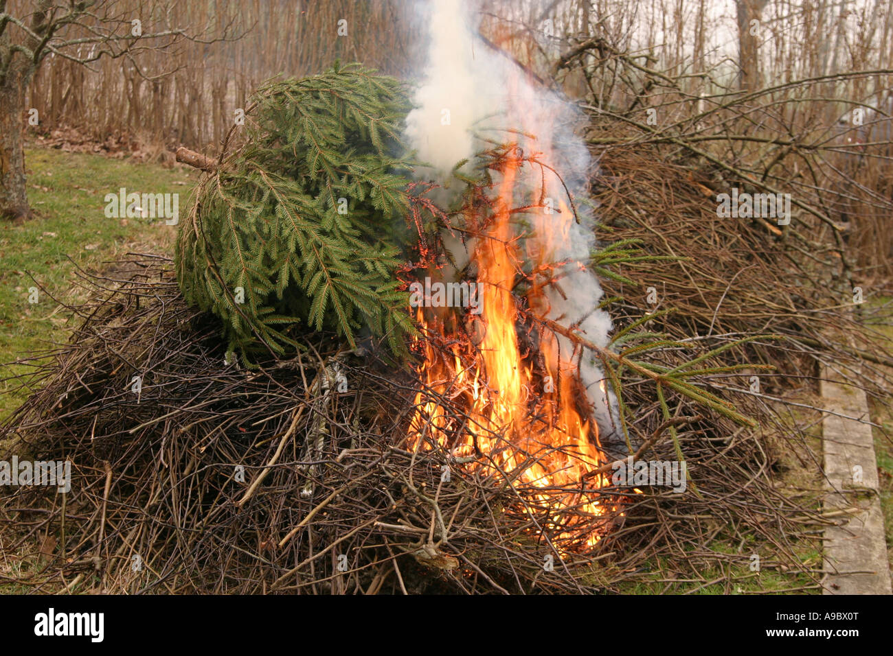 burning the old christmas tree along with some twigs stock image - What To Do With Old Christmas Trees
