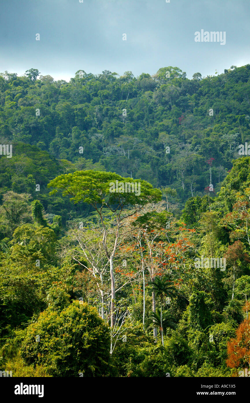 Dense rainforest in the Pirre valley near Cana field station in Darien national park, Darien province, Republic of Panama. Stock Photo