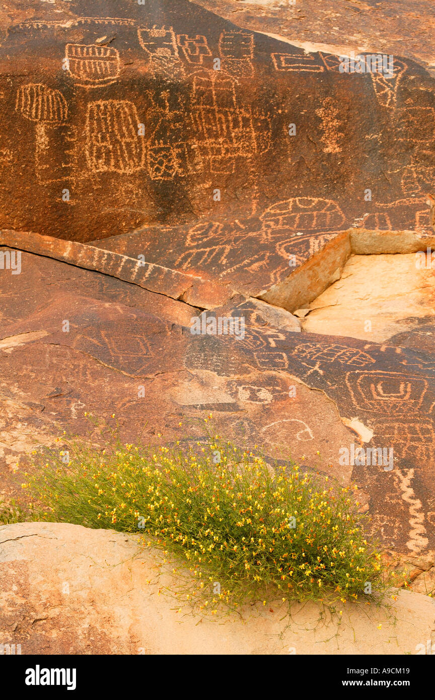 petroglyphs in grapevine canyon along christmas tree pass road lake mead recreation area near laughlin nevada