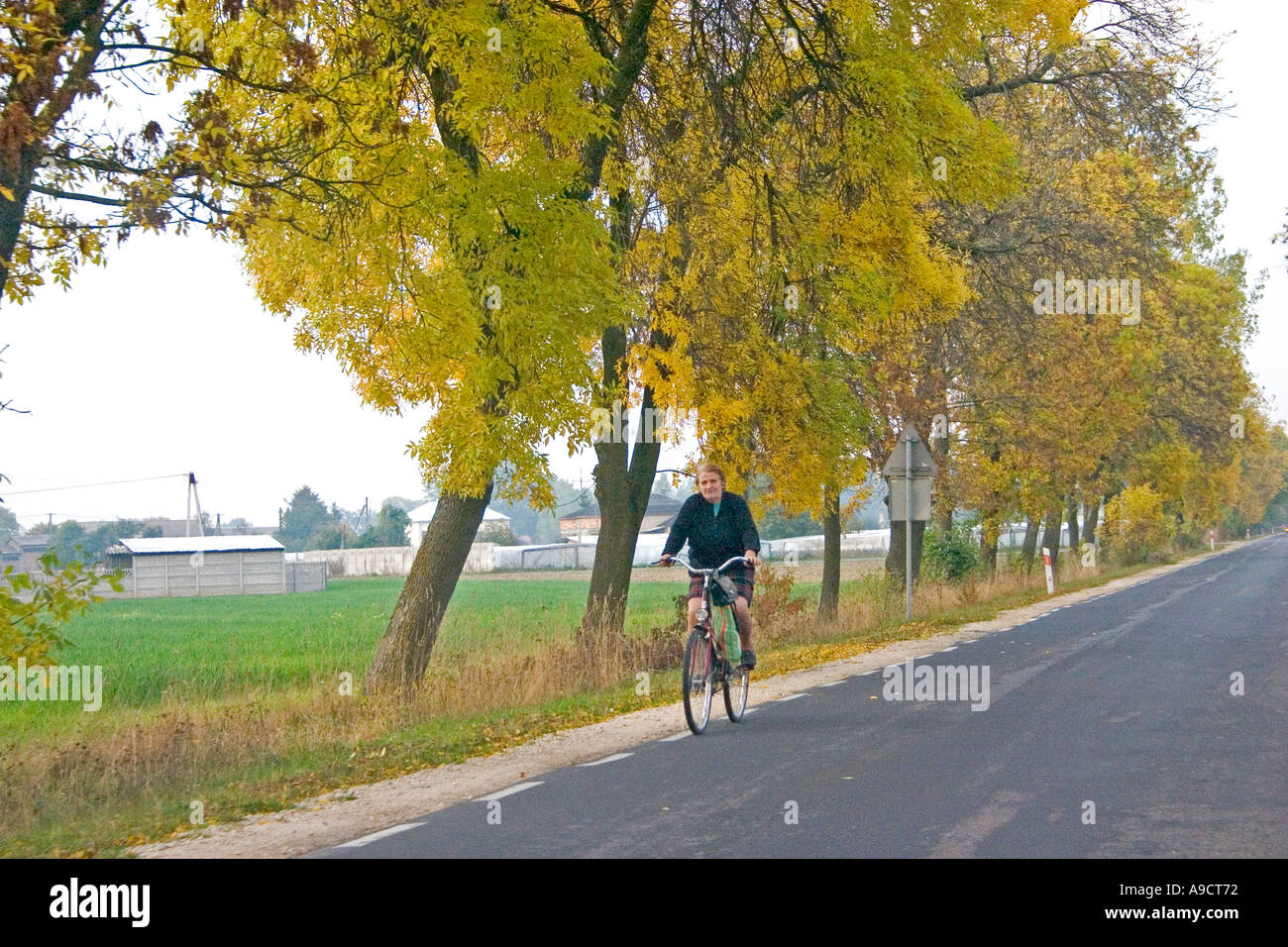 Mature woman riding bicycle down lonely tree lined road. Highway 72 between Lodz and Rawa Maz. Poland Stock Photo
